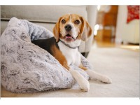 Sleeping Bags for Dogs