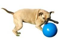 Kong Boomer Ball - Dog Toy