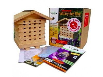 Solitary Bee Rescue