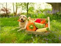 Puppy - Dog Toy