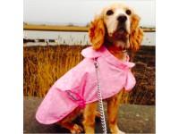Dog - Rain Coats