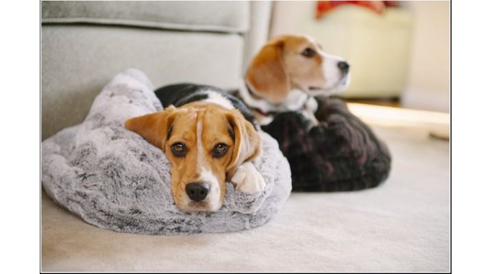 Cosy Sleeping Bags for Dogs