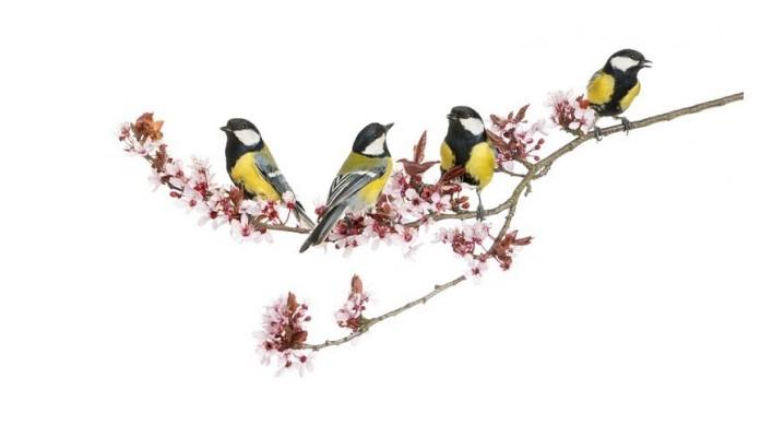 Wildlife Bird Feeders