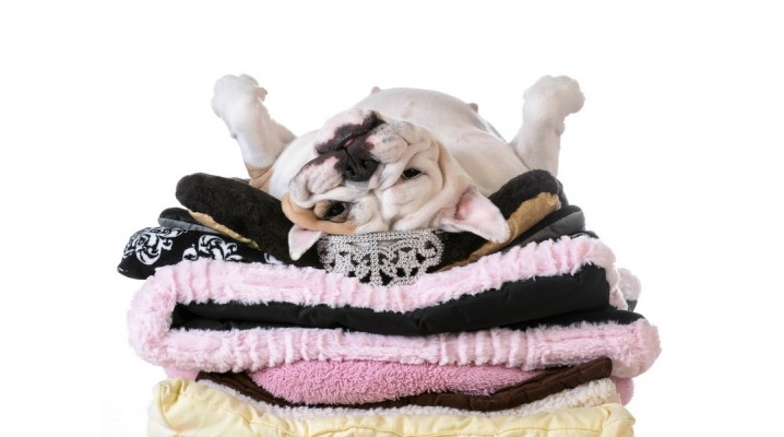 Dog Beds and Bedding