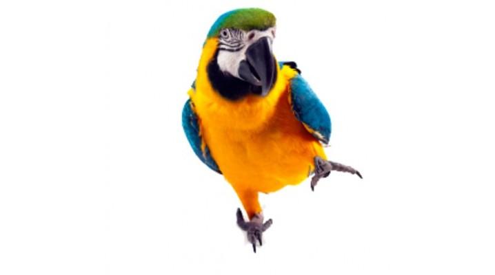Parrot - Accessories
