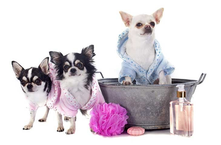 Dog Grooming & Wellbeing